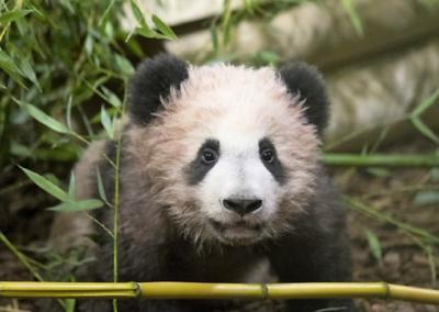 panda-sologne